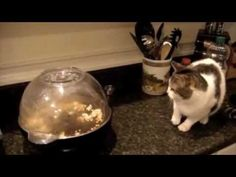 Try not to laugh. Best Animals Fail & Wins Compilation Ever !! Funny Hahahah !! - YouTube