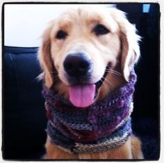 #puppy modeling a #crochet cowl for me