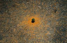 """Tree of life"", Tsavo national park, Kenya"