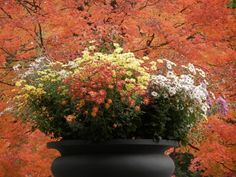 Autumn planting urn by the Mall by May Rolstad Trien #FallFoliage #centralpark