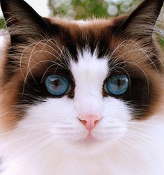 Blue eyed beauty