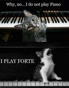 Music Humor. I feel like @Diana Parker Van Riper would highly appreciate this :)