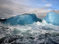 Blue iceberg with penguins atop.