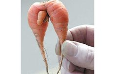 Naturaly Funny ~ Weird-fruit-and-vile-vegetables