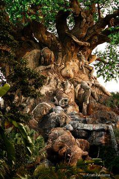 Walt Disney World - Animal Kingdom - Tree of Life