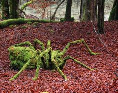 artists, spiders, nature, art photography, secret garden, art installations, landart, land art, sylvain meyer