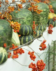 Gourds and pumpkins are plentiful in fall—farm stands and grocery store produce bins are overflowing with them. There's no planting involved—just stack them in a container or mix them among the plants.
