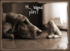 animals, friends, dogs, dog photos, dog lovers