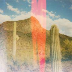 #dessert #warm #dry #cactus