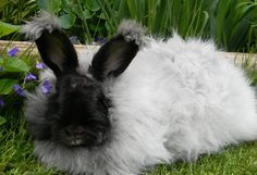 Someday I want the kids to raise Angora bunnies as part of their home schooling and as a little side businesses for them, and just because it would be awesome! kid