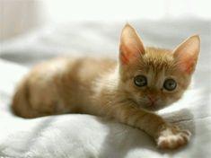 (⌒‐⌒) sweet kitten