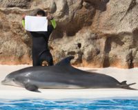 Stop New Dolphinarium in the Turks and Caicos Islands - The Petition Site
