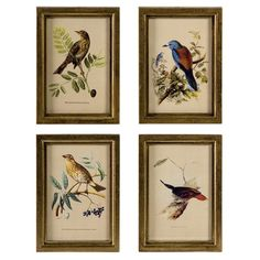 Framed print with aviary illustrations.