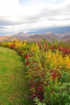 Fall in the Smoky Mountains. #Smoky  #Mountains #Hiking #Cades #Cove #National #Park #Smokies #Smokey