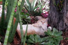 kitti cat, cat heaven
