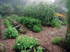 Maintain a Weedless Organic Garden