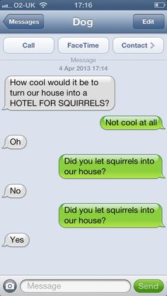 Texts From Dog texts, dogs, dog text, funni, text from dog, hotel, laughter, squirrel