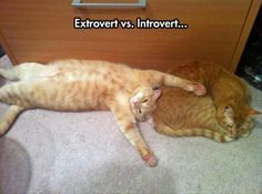 Extrovert vs introve