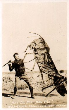 """F.D. Conard, of Garden City, Kansas, was known for his postcards of giant grasshoppers, inspired by a 1935 Kansas plague, and """"Kansas varmint,"""" the jackrabbit."""
