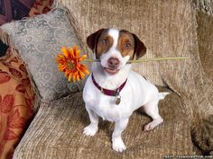 Doggie with flower for you.