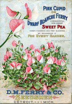 vintage seed packets printable | seed packet #printables #ephemera by Vibilia