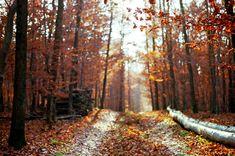 september-autumn-fall-2014-habituallychic-019