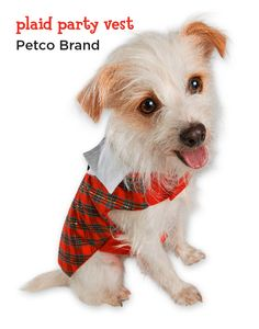 Dapper dogs need festive vests. This one is as comfortable as it is cute.