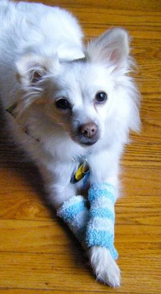 Sew DoggyStyle: Upcycled Doggy Leg Warmers.  Website has lots of DIY dog clothes & accessories.