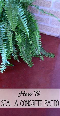 Seal a concrete patio to restore color and shine. It's super easy!!