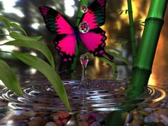 butterfly on water droplet | ... Sadeghi's Homepage: A Butterfly, A Water Drop and a High Speed Camera