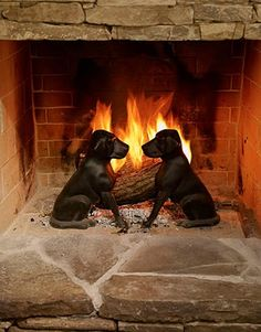 Love this two dog display in front of the fire!