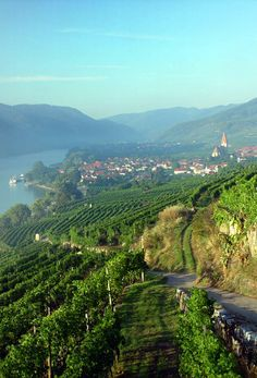 Not only one of the best wine regions in Austria, but also a wonderful spot for hiking. #austria #wachau #wine #travel #hiking #whitewine #sun #drinking