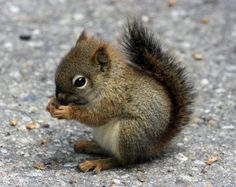baby squirrel cuteness!