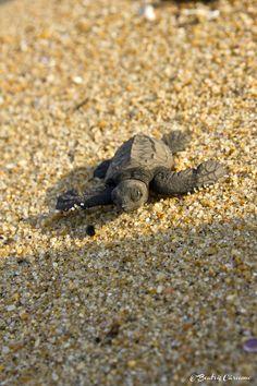 Liberando tortugas en Playa Ventura Guerrero
