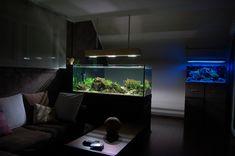 Simply par Oliléon. #aquascaping #aquarium #fishtank