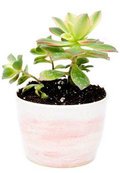 Cherry Blossom Pebble Planter
