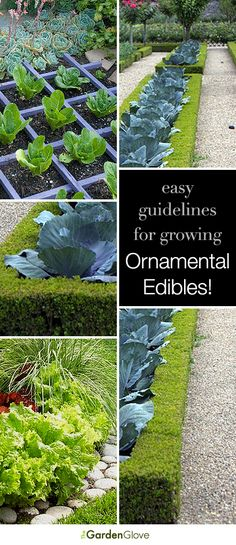 Easy guidelines for growing ornamental edibles!
