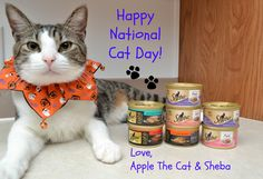 Keeping Cats Happy In Honor Of National Cat Day #ShebaCat #Shop | Optimistic Mommy #NationalCatDay