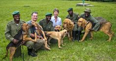 Meet the awesome dogs that are stamping out elephant poaching