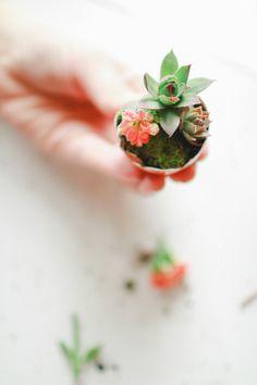 mini plant, flower pots, planter, mini gardens, little flowers