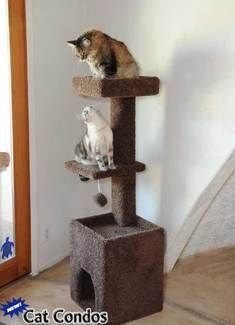 cat play towers on pinterest. Black Bedroom Furniture Sets. Home Design Ideas