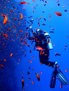 Diving in the Red Sea.