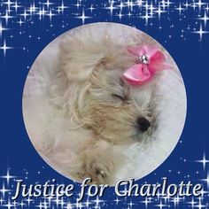 RALLY TO SHOW SUPPORT FOR TORTURED, BEATEN 2LB, 11 WK OLD PUPPY left to die and blind from her injuries! Show the judge she has support! NYC-- AND TRI STATE AREA Monday, September 22at 7:00am in EDT 67 Targee Street, Staten Island, NY 10304