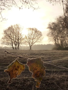 Frosty leaves and cold noses