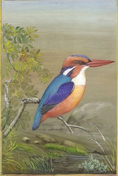 Little Kingfisher Bi