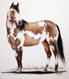 Paint Horse Pencil Drawings