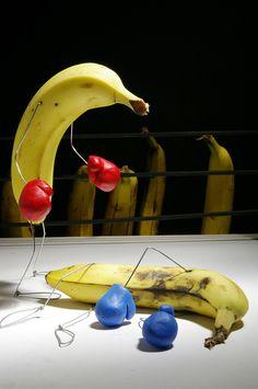 floors, bananas, boxing, boxers, wire art, blog, bent object, food fight, terri border