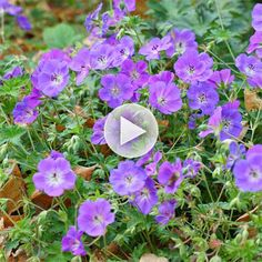Add colorful flowers that come back year after year. Watch our Easy-Care Perennial video here: http://www.bhg.com/videos/m/60413656/the-best-easy-care-perennial-flowers.htm