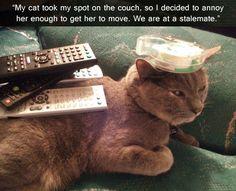 So cat like.
