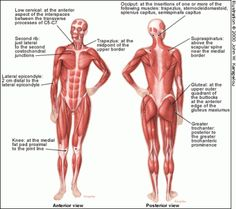 Fibromyalgia - Information and Natural Cures